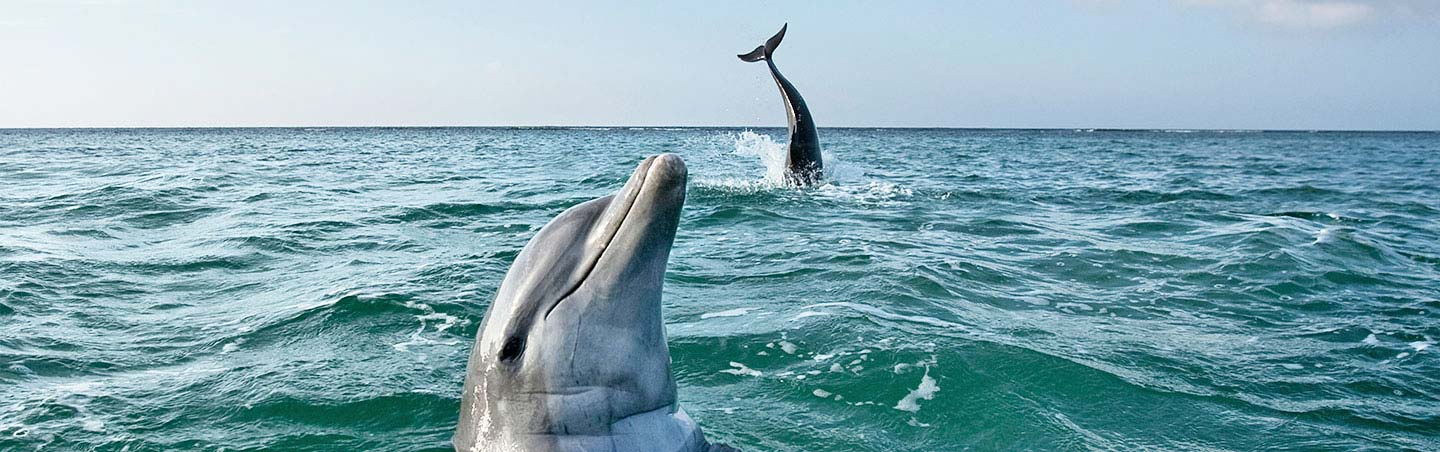 Dolphins - Caribbean Family Breakaway Multisport Adventure Tour
