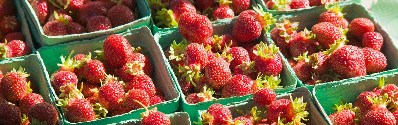 Berries on Backroads Gulf Islands Family Multisport Adventure Tour