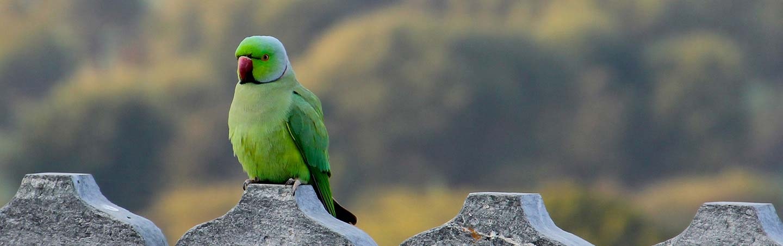 Bird on Backroads India Multisport Tour