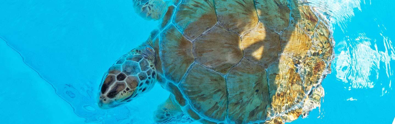 Sea Tutle - Backroads Everglades to Key West Family Breakaway Multisport Adventure Tour