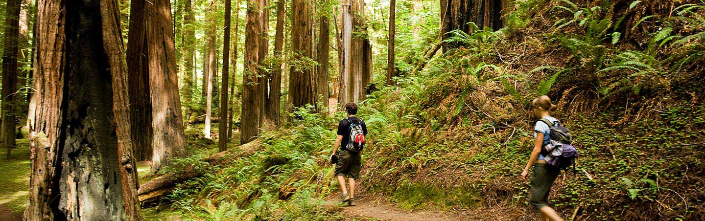 Hiking - Backroads Redwood Empire Family Breakaway Multisport Tour