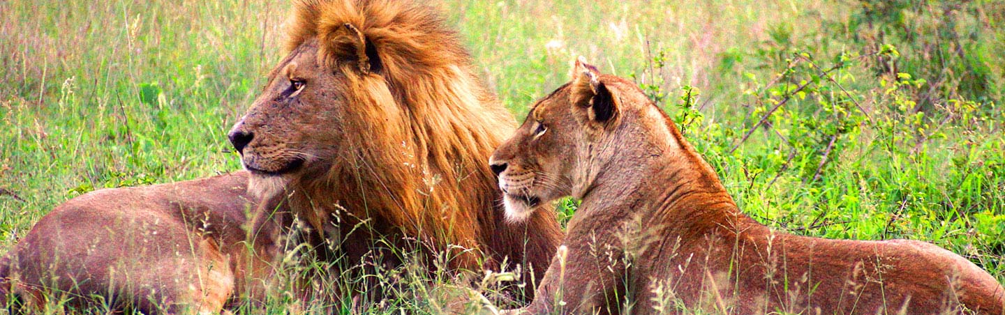 Lions - South Africa & Botswana Multisport Adventure Tour