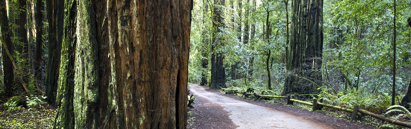 Armstrong Redwoods - Backroads California Wine Country Multisport Adventure Tour