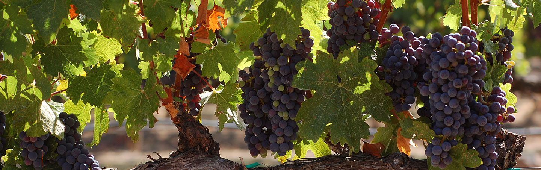Vineyard on Backroads California Wine Country Multisport Adventure Tour
