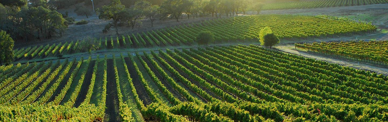 Vineyard - Backroads California Wine Country Multisport Tour