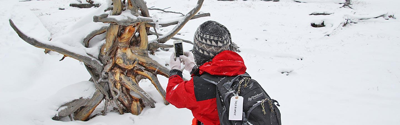 Yellowstone and Tetons Winter Adventure Tour
