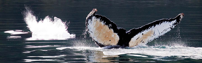 Wildlife Watching - Backroads Prince William Sound to Denali Multisport Tour