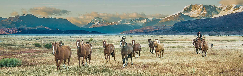 Horses in Argentina - Patagonia Walking & Hiking Tour