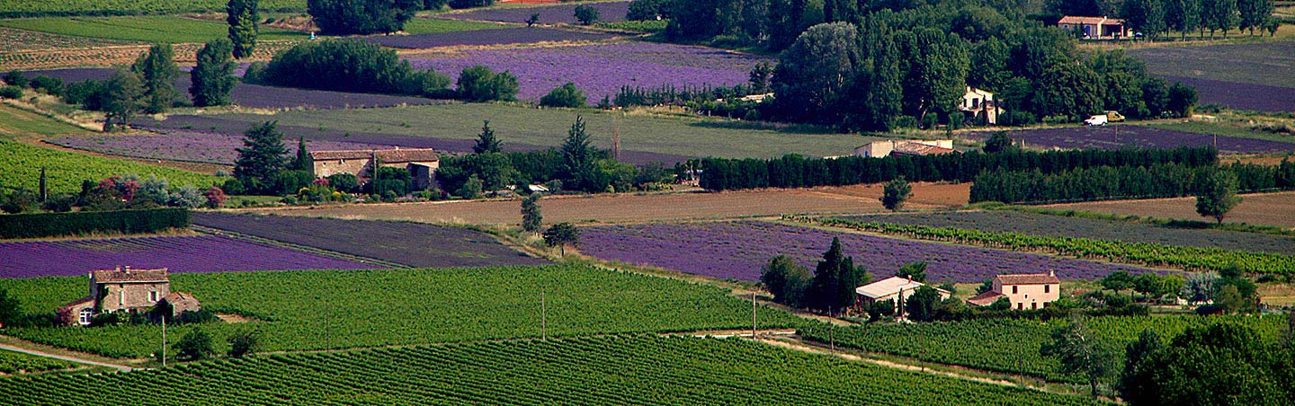 Lavender Fields - Backroads Provence Walking & Hiking Tour