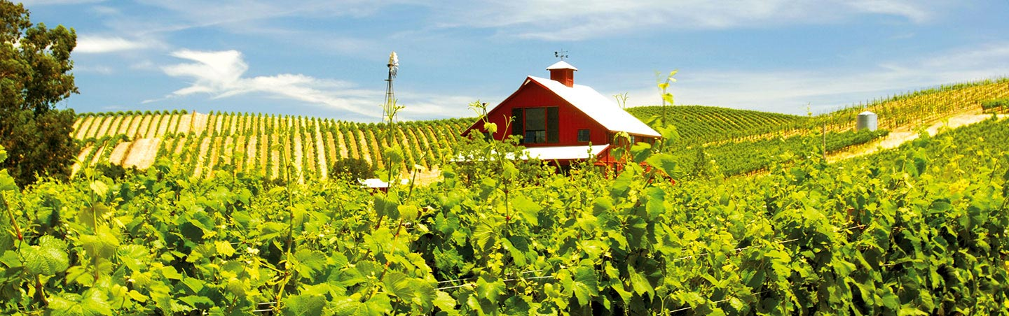 Backroads California Wine Country Active Culinary Walking Tour