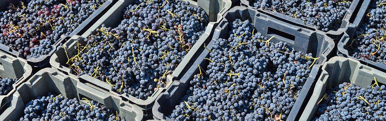 Grapes on Backroads Portugal Bike Tour