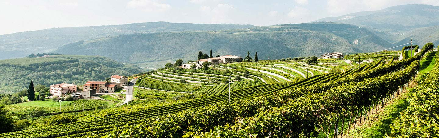 Vineyards in Verona, Italy - Backroads