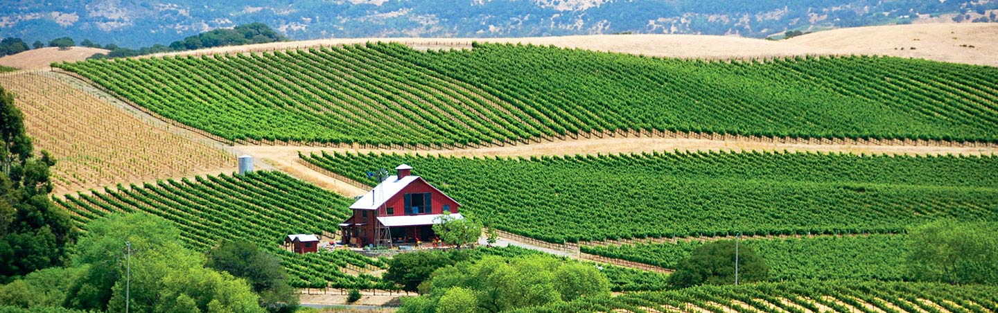 Wine Country And Redwoods Tour Reviews
