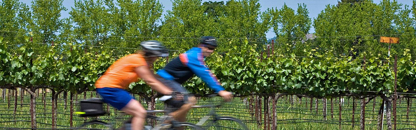 Napa Valley Bike Tour