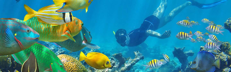 Snorkeling on Backroads Caribbean Multisport Adventure Tour