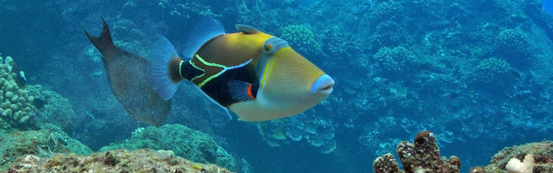 Tropical Hawaiian Fish - Maui & Lanai Multisport Adventure Tour