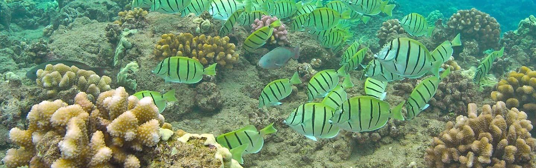 Snorkeling on Backroads Maui & Lanai Family Multisport Adventure Tour