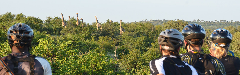 Zebras in Africa - Bike Tours