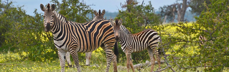 Zebras, South Africa & Botswana Family Bike Tour