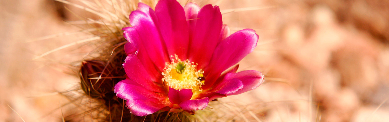 Desert Wildflower - Backroads Sedona Walking & Hiking Tour