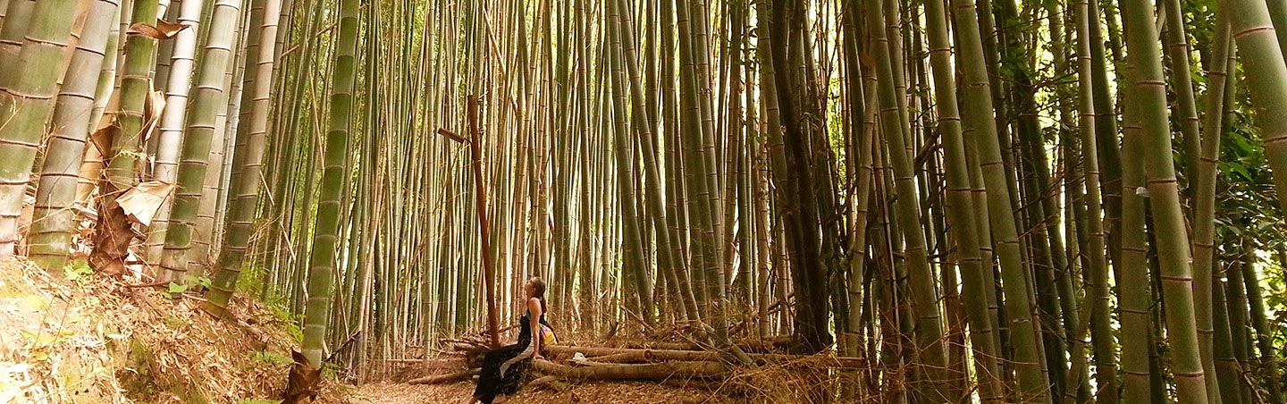 Hiking in bamboo forest - Backroads Japan Walking & Hiking Tour