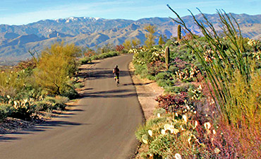 Arizona ​Family Bike Tour - 20s & Beyond
