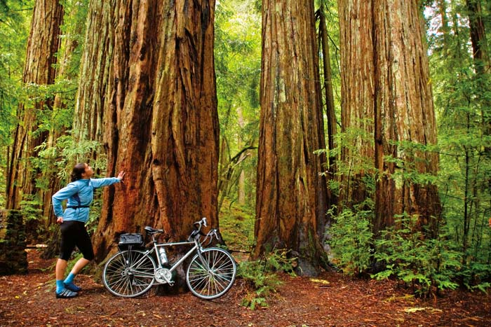 Armstrong Redwoods - Sonoma Wine Country Weekend Bike Tour