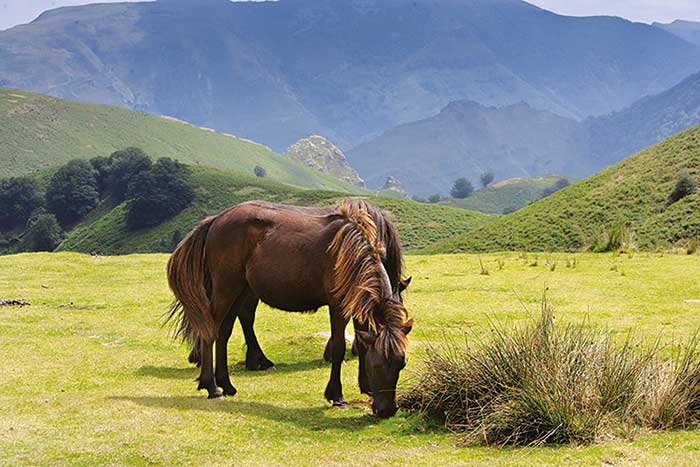 Horses - Backroads French Pyrenees & Spain's Rioja Region Bike Tour