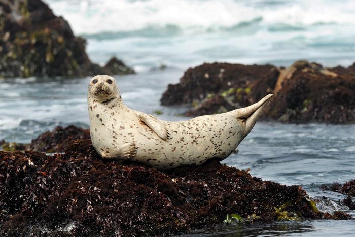 Seal on Backroads California Coast Bike Tours