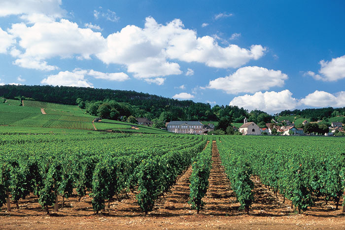 Vineyard, Burgundy, France