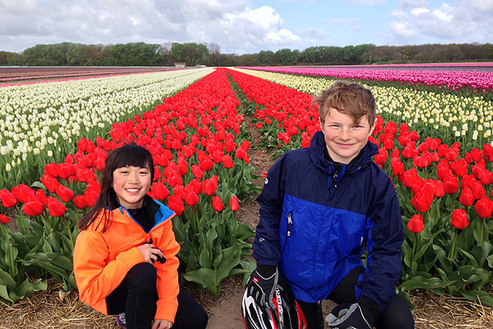 Dutch Tulip Fields, Holland