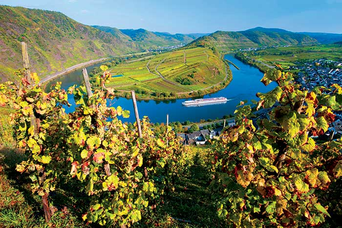 Rhine River Cruise Bike Tour