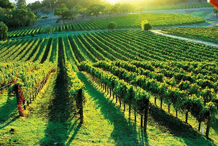 Vineyard - California Wine Country Bike Tour