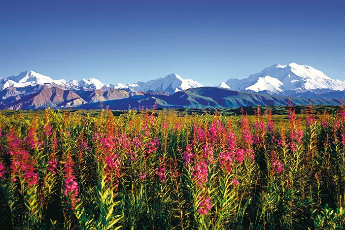 Denali Hiking Tours