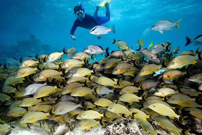 Snorkeling - Belize & Guatemala Multi-Adventure Tours