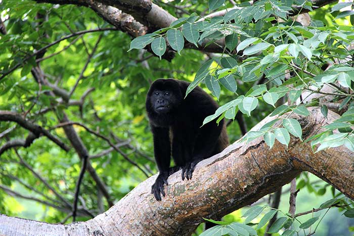 Monkey - Belize & Guatemala Multisport Adventure Tours