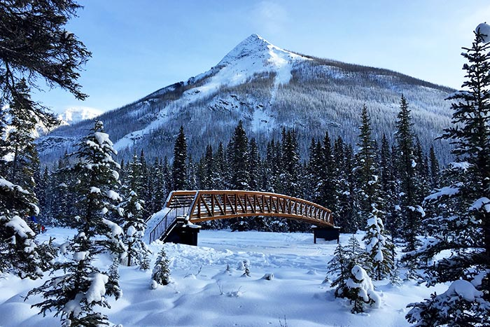 Dog sledding, Canadian Rockies Winter Multi-Adventure Tour