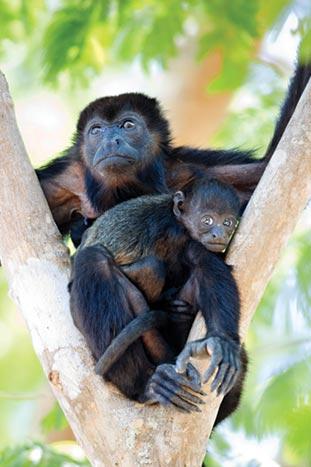 Monkey - Costa Rica Family Breakaway Multisport Adventure Tour