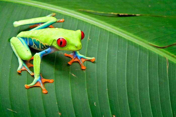 Frog - Costa Rica Family Multi-Adventure Tour