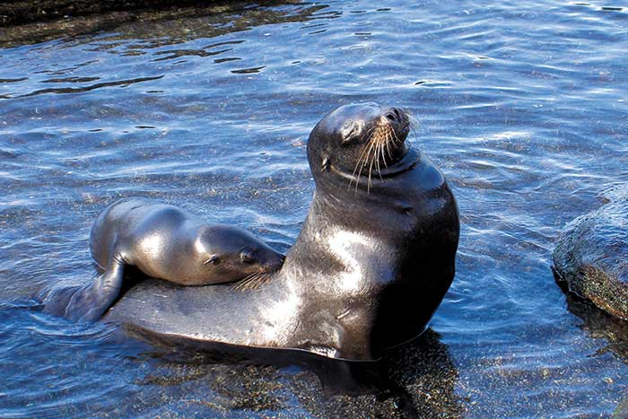 Seals - Galapagos & Andes Family Multi-Adventure Tour