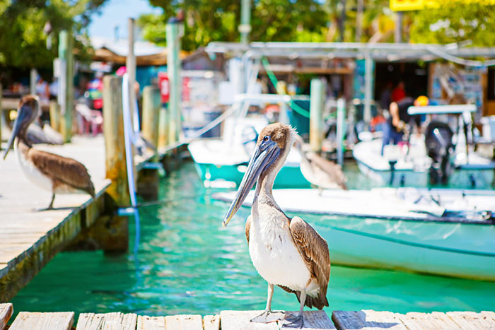 Pelicans - Backroads Everglades to Key West Family Breakaway Multisport Adventure Tour