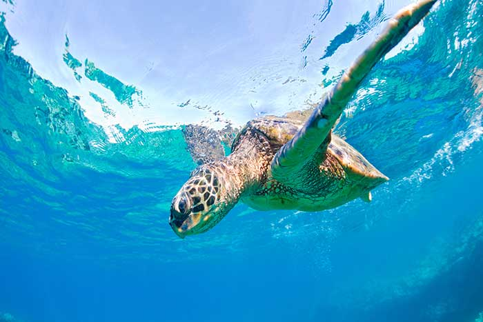 Sea Turtle - Maui & Lanai Multi-Adventure Tour