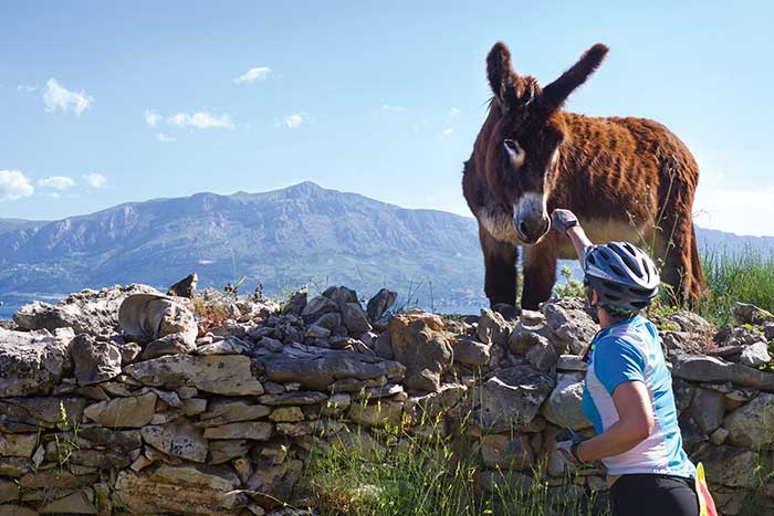 Biking on our Dalmatian Coast to Montenegro Multisport Adventure Tour