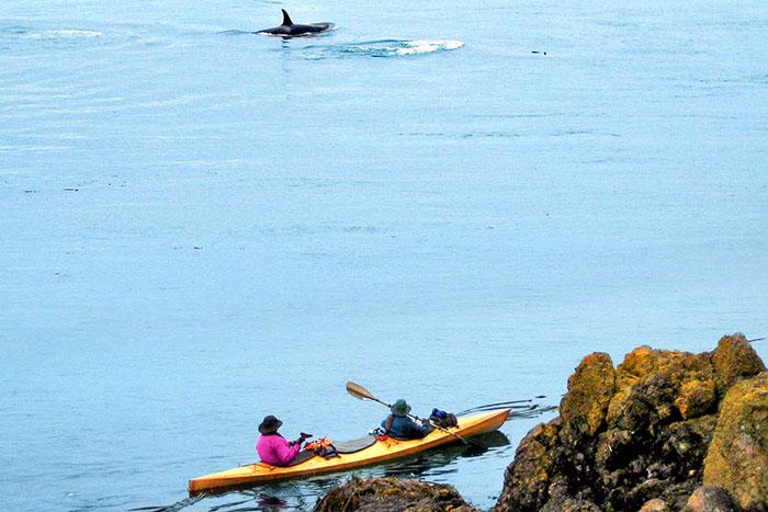 Kayaking on Backroads San Juan Islands Family Multisport Tour