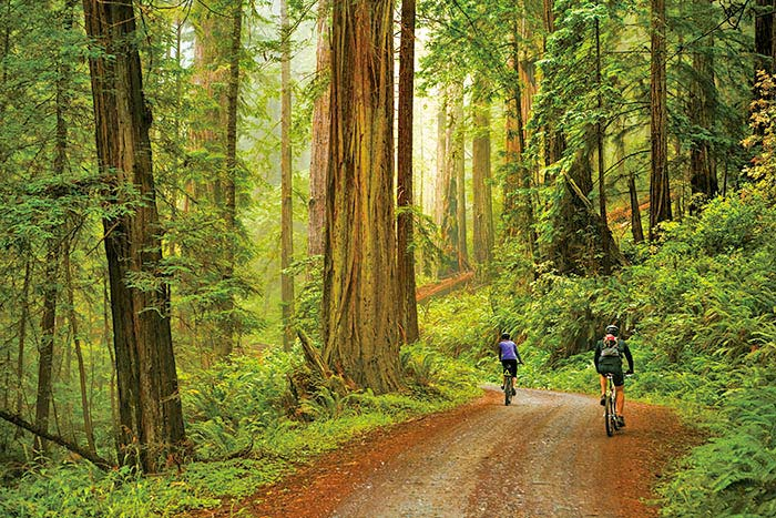 Hiking on Backroads Redwood Empire Multisport Tour