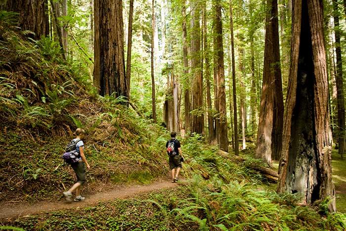 Hiking - Backroads Redwood Empire Family Breakaway Multisport Tour