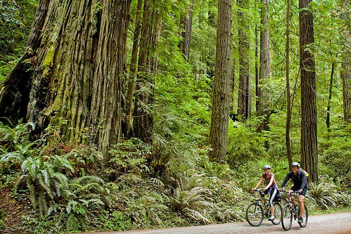 Backroads Redwood Empire Family Multisport Tour