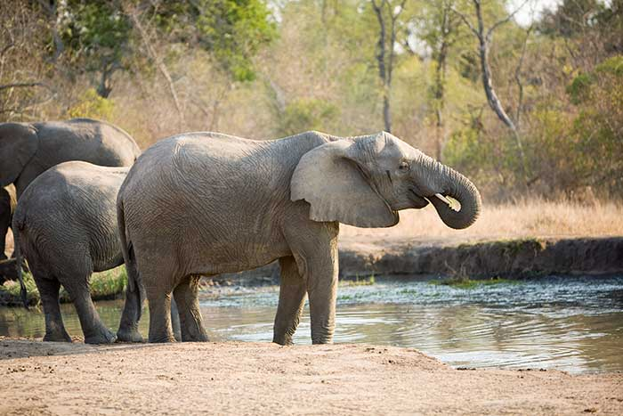Elephant- Backroads South Africa & Botswana Family Breakaway Multisport Adventure Tour