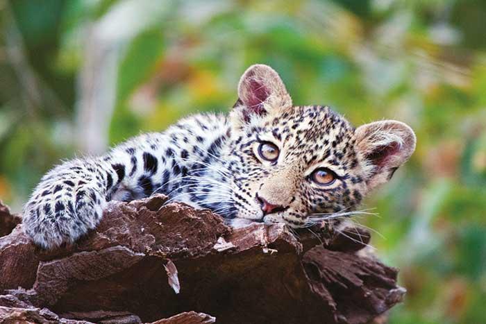Safari, Backroads South Africa & Botswana Family Multisport Adventure Tour