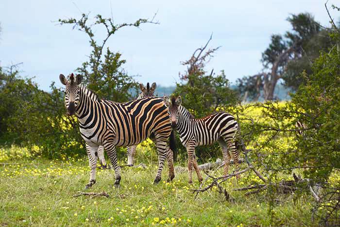Zebras, South Africa & Botswana Family Multisport Adventure Tour